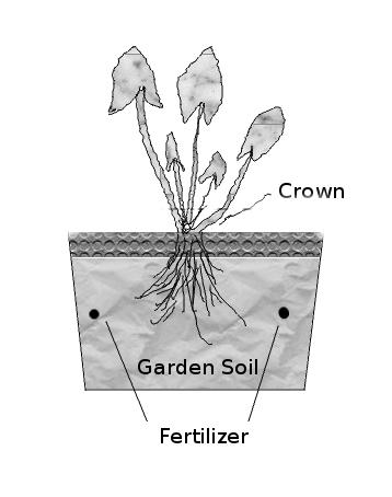 bog-plant.jpg